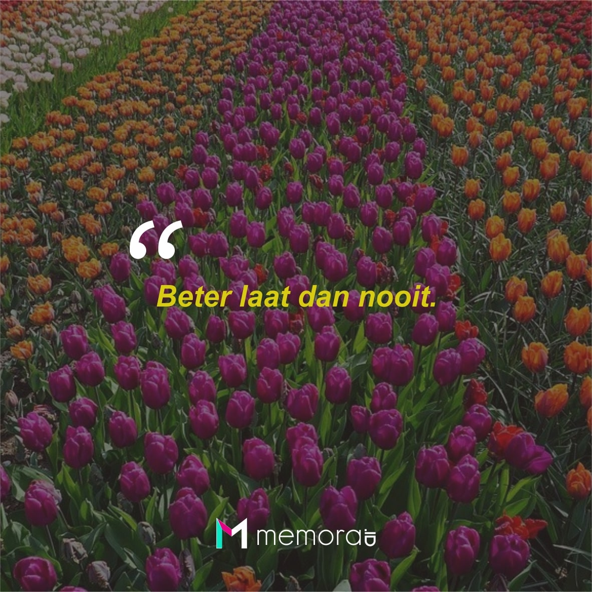 Quotes Bijak Bahasa Belanda