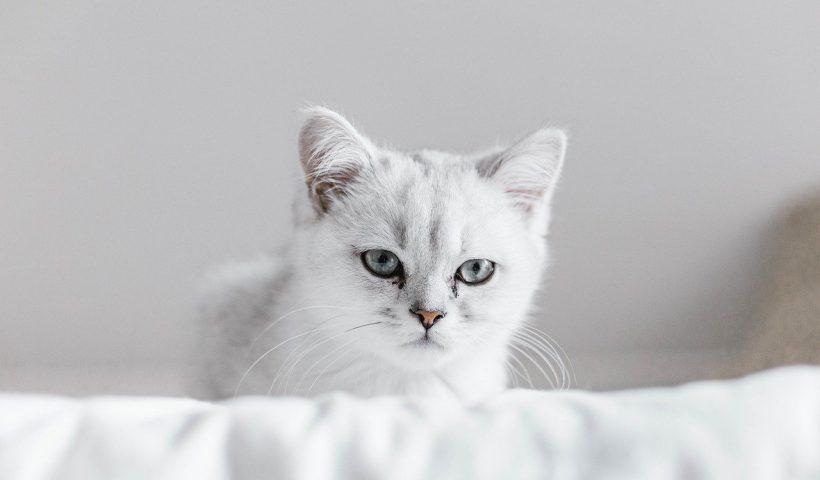 Doa Kucing Sakaratul Maut