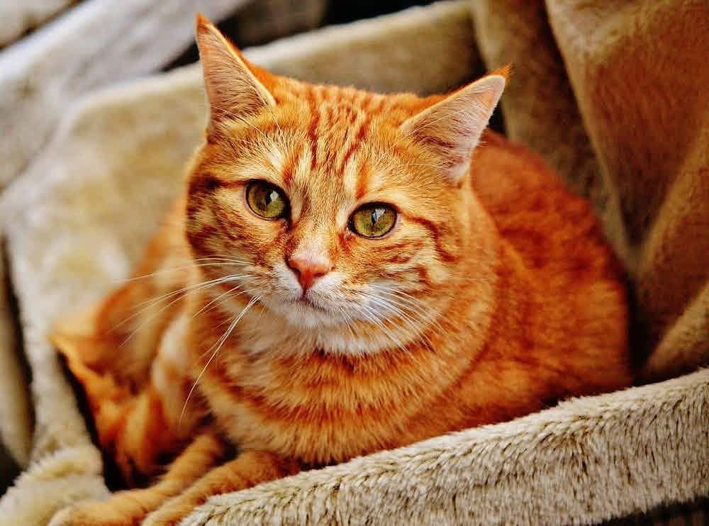 Doa Kucing Cepat Sembuh dari Penyakit