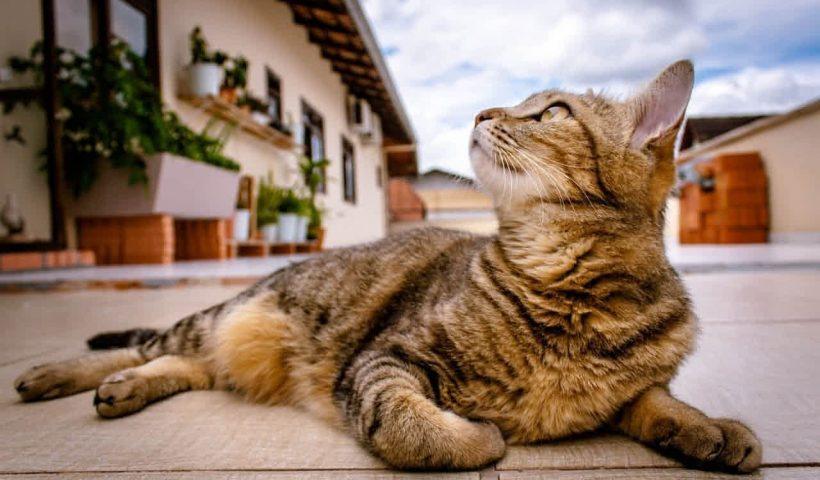 Doa Kucing Hilang dari Rumah