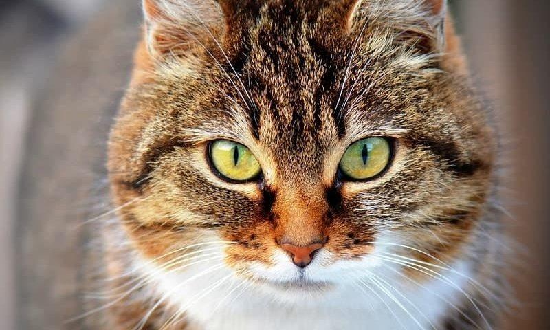 Doa Kucing Melahirkan