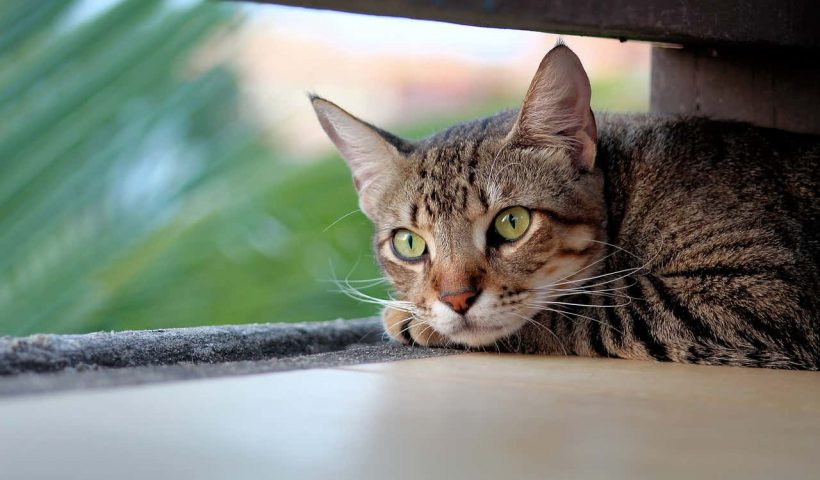 Doa Kucing Sakit