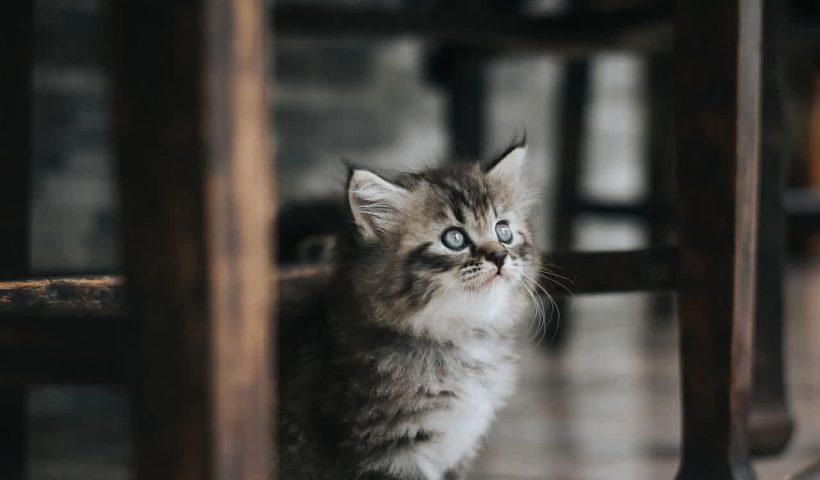 Doa Kucing Kelaparan