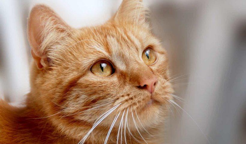 Doa Kucing untuk Majikannya